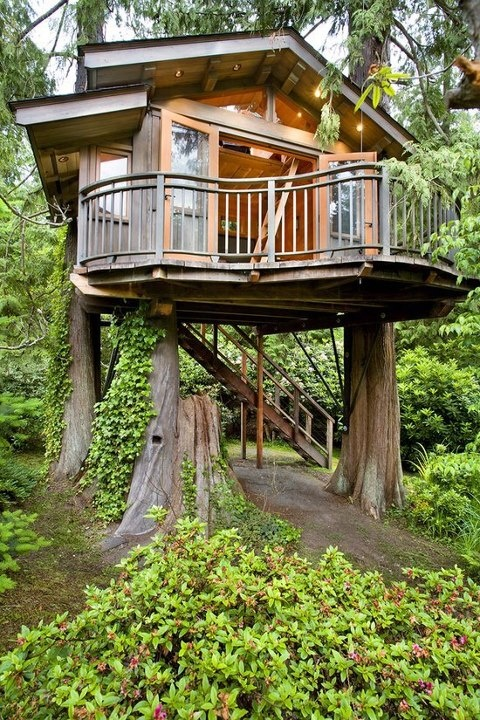 family tree house on three trunks