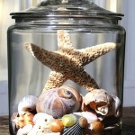 Ways to use Starfish and Shells as Coastal Kids' Room Accessories